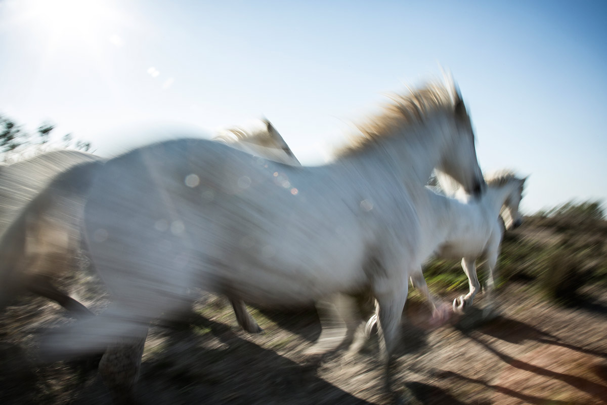 camargue_horse_workshop_2014_034