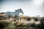camargue_horse_workshop_2014_035