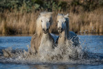 camargue_horse_workshop_2014_037