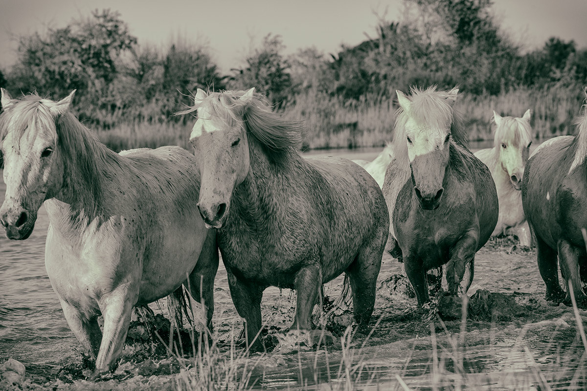 camargue_horse_workshop_2014_038