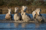 camargue_horse_workshop_2014_039