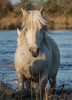 camargue_horse_workshop_2014_041