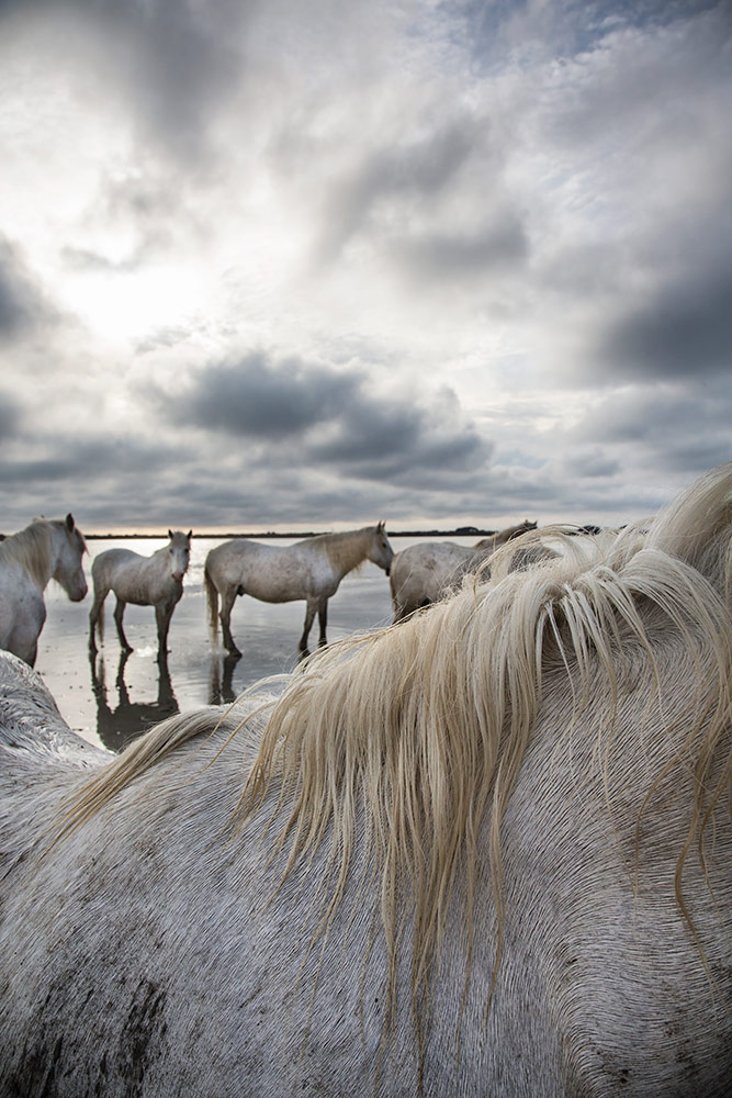 camargue_horse_workshop_2014_042