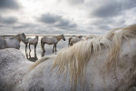 camargue_horse_workshop_2014_043