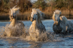 camargue_horse_workshop_2014_044