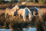 camargue_horse_workshop_2014_045