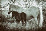 camargue_horse_workshop_2014_050