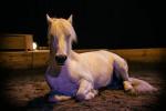 camargue_horse_workshop_2014_052