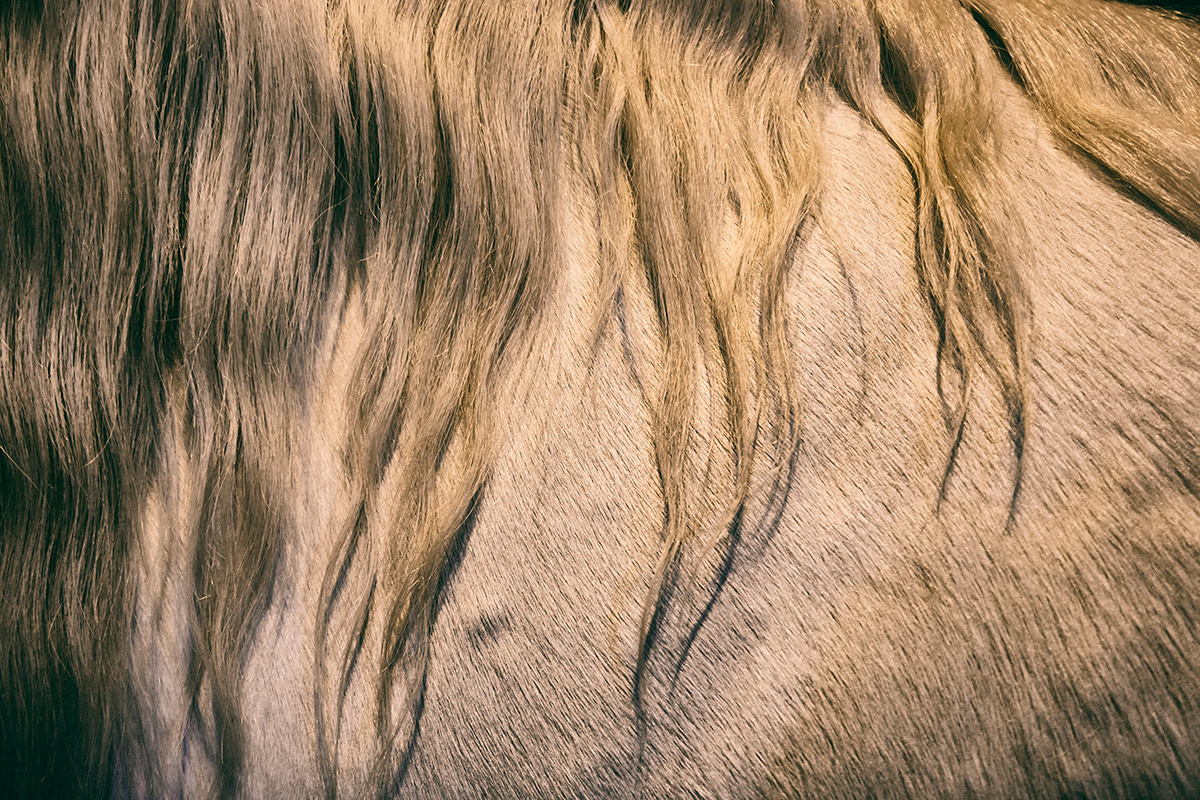 camargue_horse_workshop_2014_054