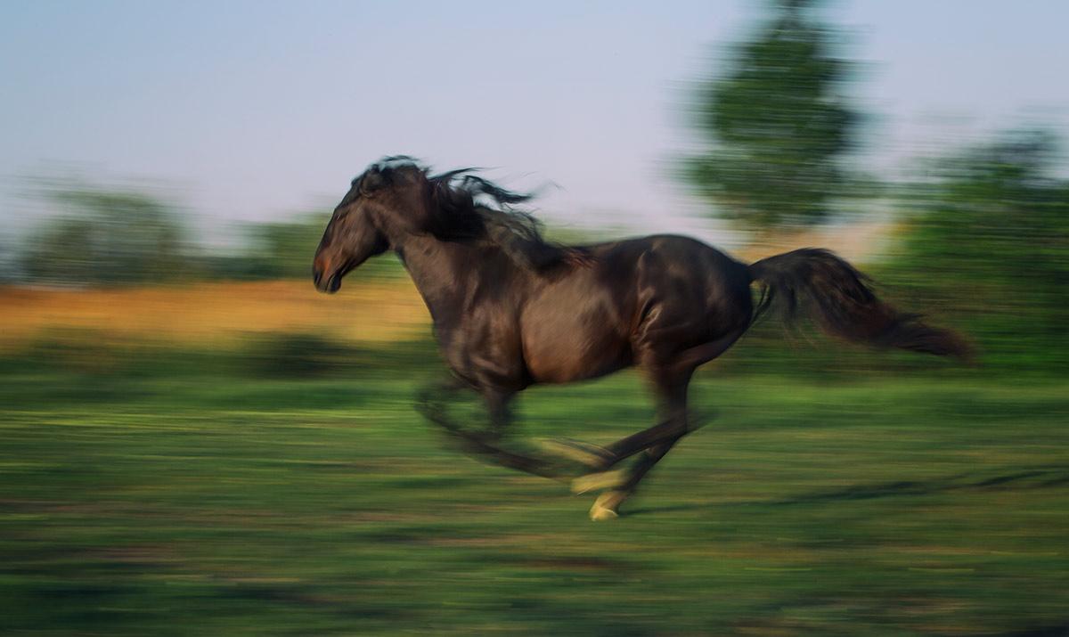 camargue_horse_workshop_2014_056