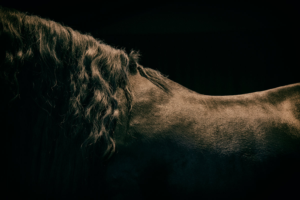 camargue_horse_workshop_2014_057