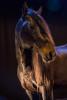 camargue_horse_workshop_2014_058