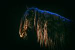 camargue_horse_workshop_2014_059