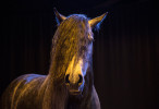 camargue_horse_workshop_2014_060