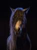 camargue_horse_workshop_2014_061