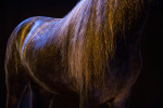 camargue_horse_workshop_2014_062
