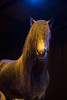 camargue_horse_workshop_2014_064