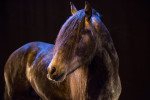 camargue_horse_workshop_2014_065