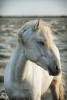 camargue_horse_workshop_2014_066