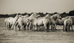 camargue_horse_workshop_2014_067