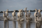 camargue_horse_workshop_2014_068