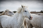 camargue_horse_workshop_2014_069
