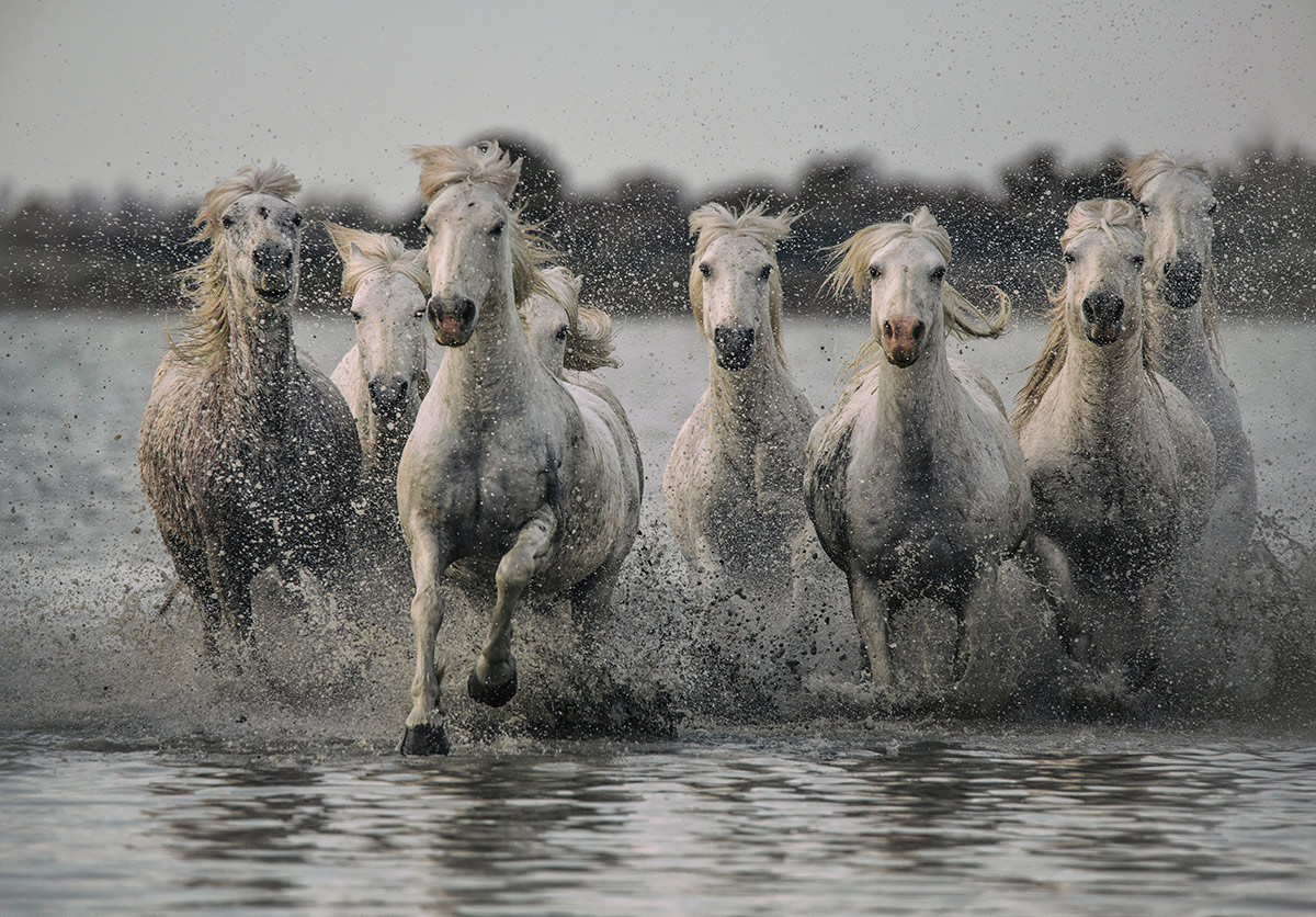 camargue_horse_workshop_2014_070