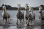 camargue_horse_workshop_2014_071