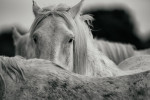 camargue_horse_workshop_2014_072