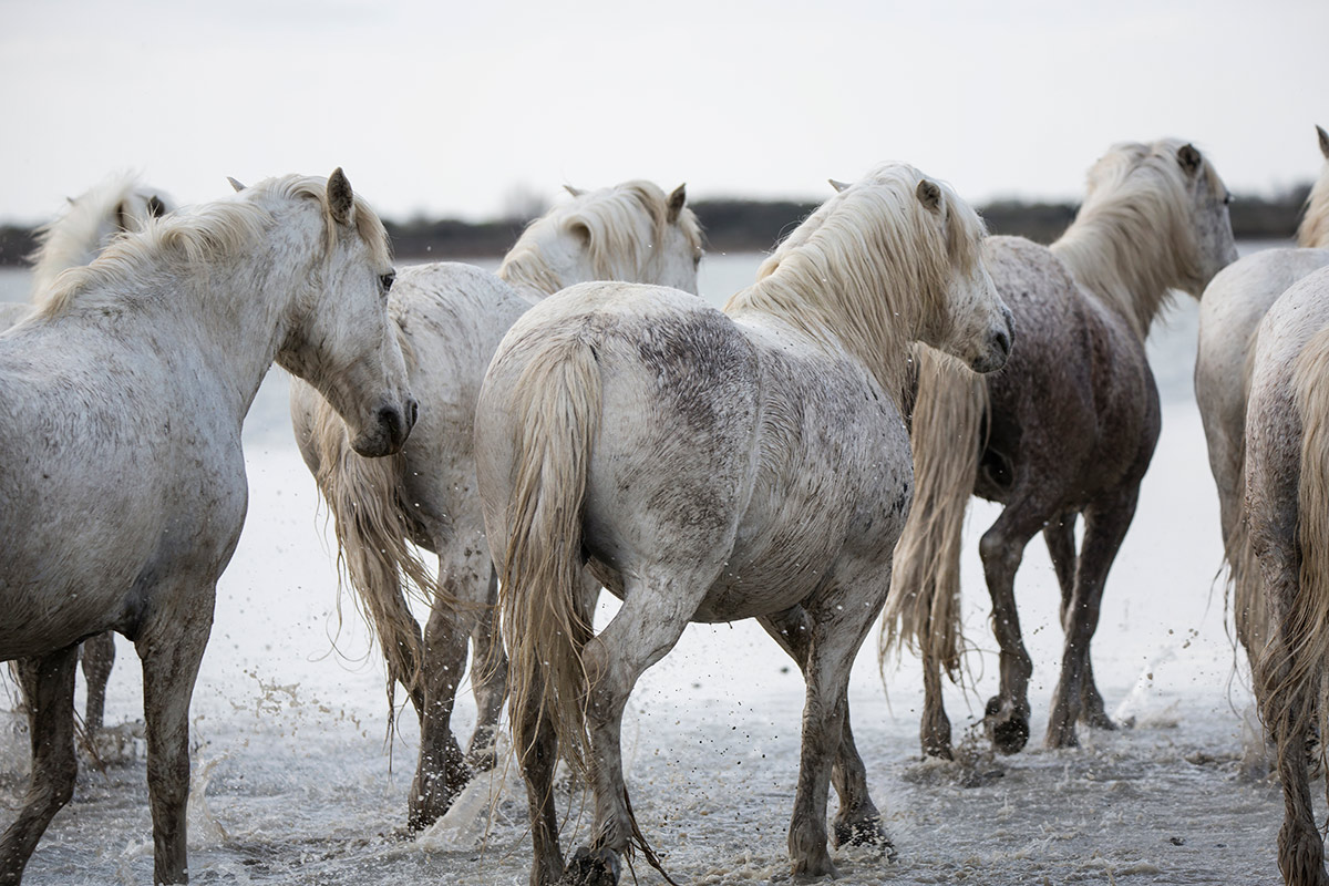 camargue_horse_workshop_2014_073