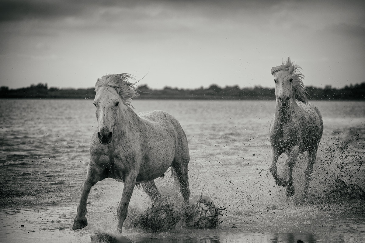 camargue_horse_workshop_2014_074