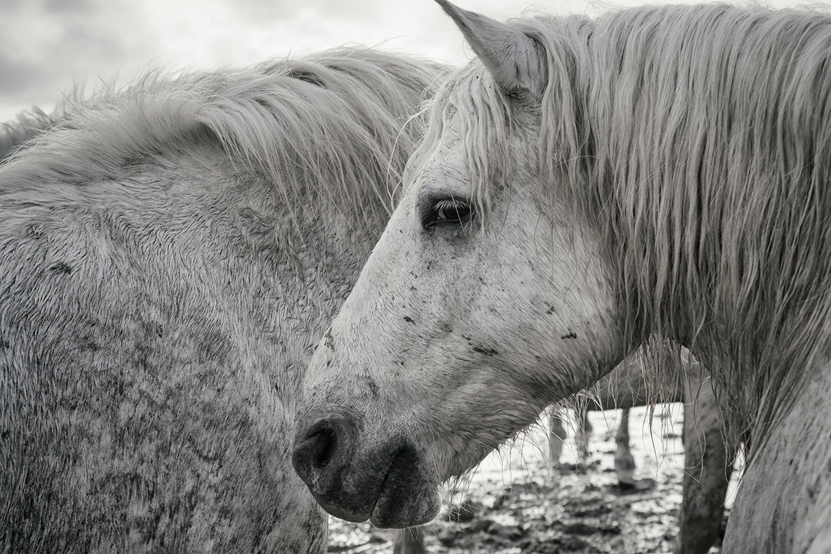 camargue_horse_workshop_2014_075