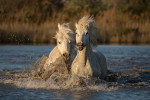 camargue_horse_workshop_2014_076