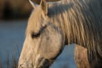 camargue_horse_workshop_2014_077