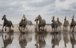 camargue_horse_workshop_2014_078