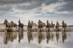 White Camargue horse workshop in France