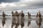camargue_horse_workshop_2014_080
