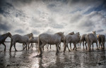 camargue_horse_workshop_2014_081