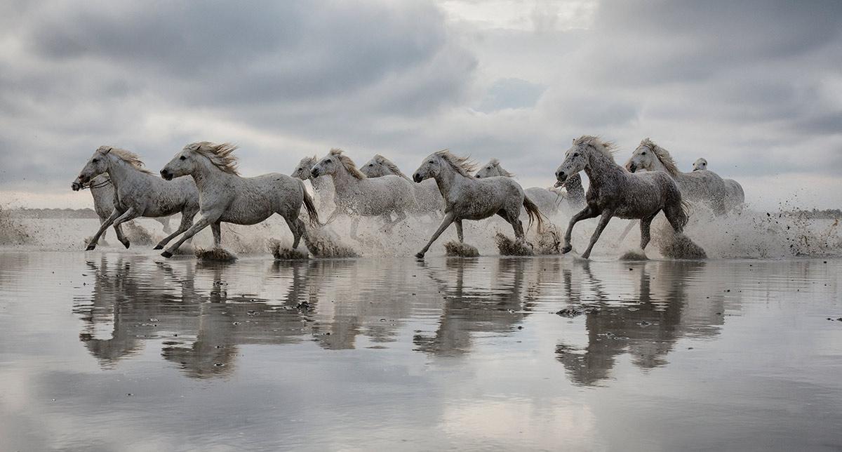 camargue_horse_workshop_2014_082