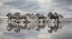 camargue_horse_workshop_2014_082