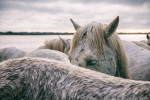 camargue_horse_workshop_2014_084
