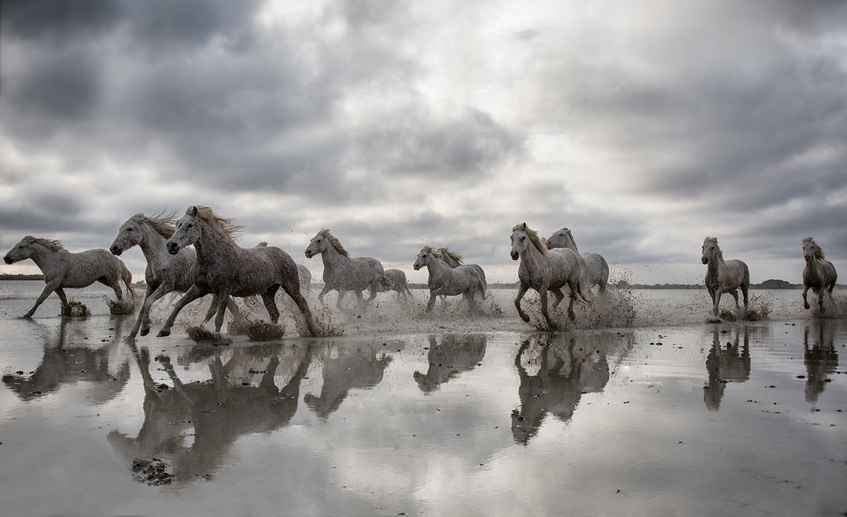 camargue_horse_workshop_2014_085