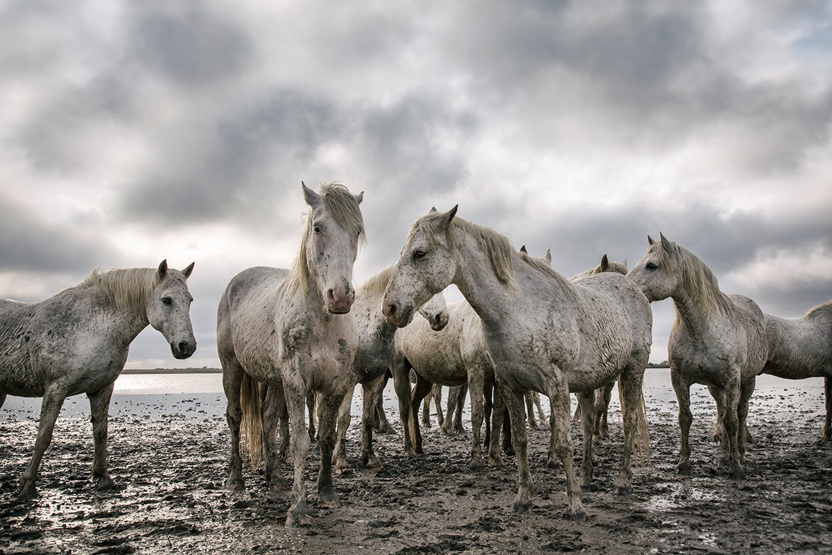 camargue_horse_workshop_2014_088