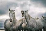 camargue_horse_workshop_2014_089