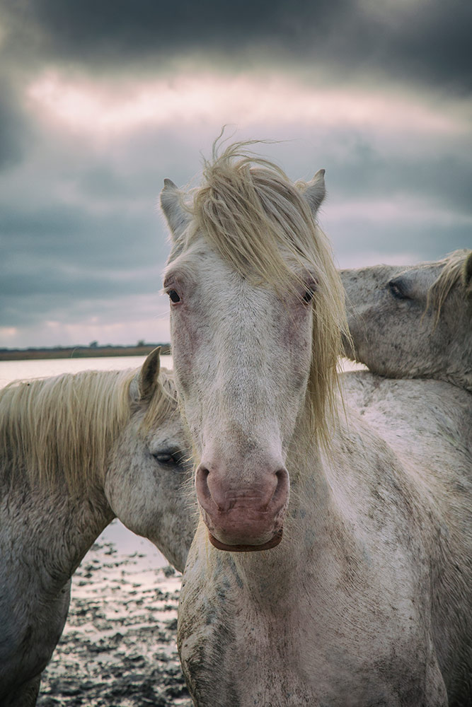 camargue_horse_workshop_2014_090