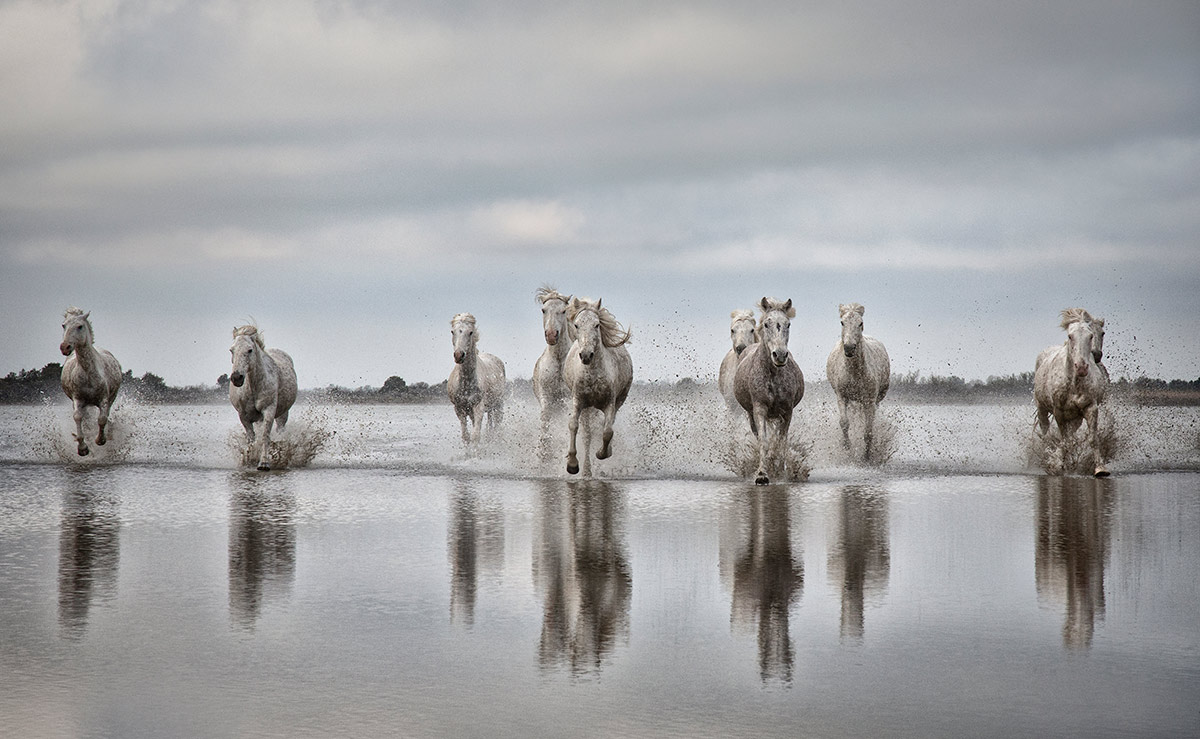 camargue_horse_workshop_2014_091