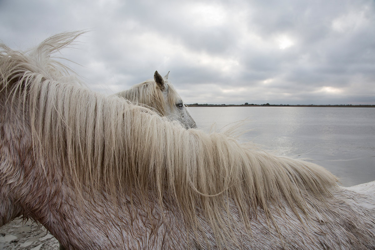 camargue_horse_workshop_2014_092