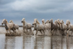 camargue_horse_workshop_2014_093