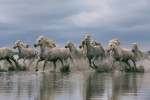 camargue_horse_workshop_2014_094