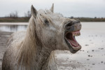 camargue_horse_workshop_2014_095